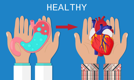 Healthy lifestyle concept. Doctor hold heathy stomach. Person keep heathy heart. Flat style. Vector illustration Illustration