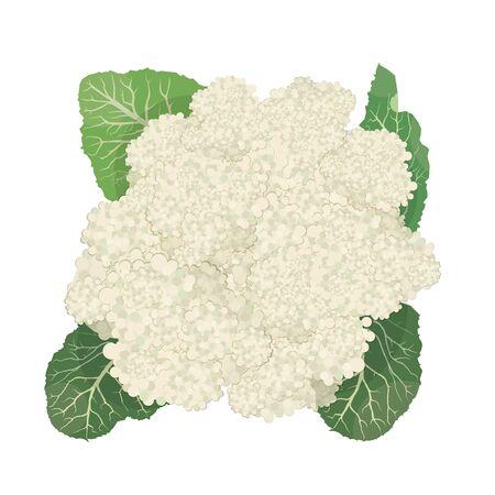 Cauliflower isolated on white background 向量圖像