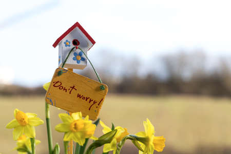 renewing: Narcisses and happy birdhouse in spring, Luxembourg
