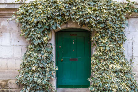backdoor: Old ivy wall with small green door in Westminster, London