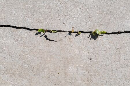 Green sprout breaks through asphalt. The beginning of a new life concept. Flat lay