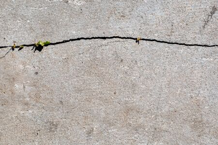 A young little green plant starting to grow in a crack of concrete. The beginning of a new life concept. Flat lay