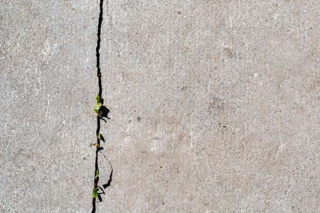 Grass growing through cracks in a concrete footpath. The beginning of a new life concept. Flat lay Stock Photo