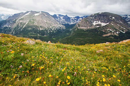 Forest Canyon in Rocky Mountains in summer as seen from Trail Ridge Road Stok Fotoğraf