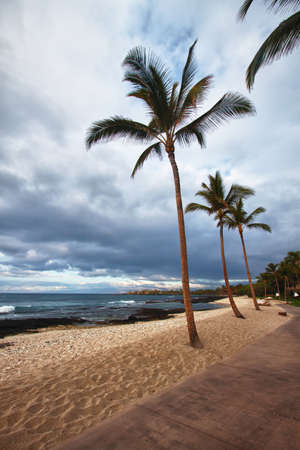 palms on the beach in stormy weather in Hawaii photo