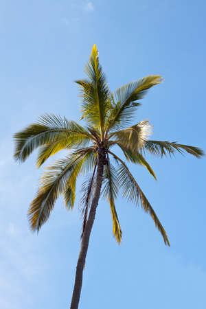coconut trees and blue sky tropical scenery photo