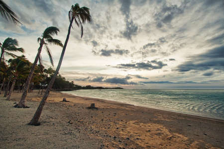 palm tree and the ocean with stormy sky photo