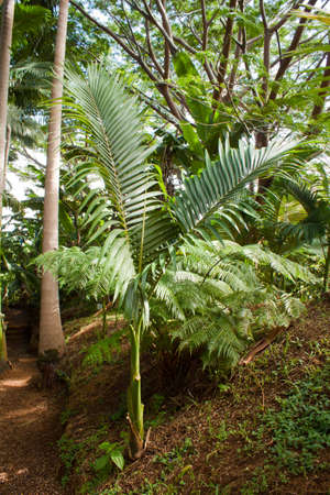 Green fern in Hawaian tropics photo