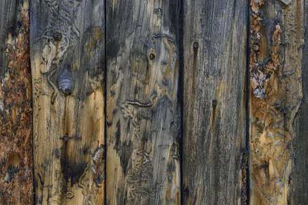 closeup of the old wood pattern, background photo