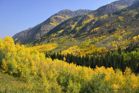 valley in the mountains of Colorado with golden and green aspen during foliage season Stock Photo