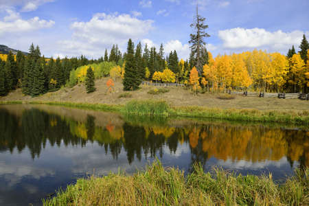 western usa: reflection of golden and green trees in the lake of colorado during fall