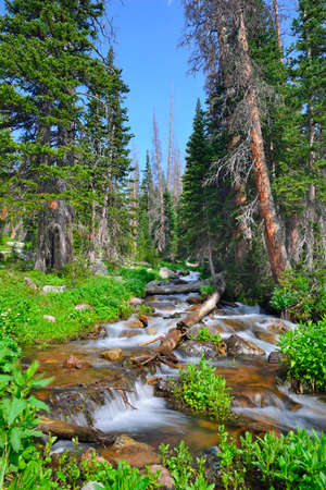 mountain stream in the wilderness of Colorado during summer Stock Photo