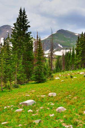 alpine tundra: high alpine tundra in Rawah Wilderness, Colorado during summer
