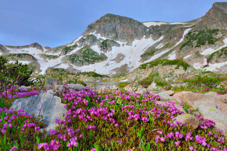 alpine tundra: wild flowers at high altitude alpine tundra and a mountain lake in Colorado during summer Stock Photo