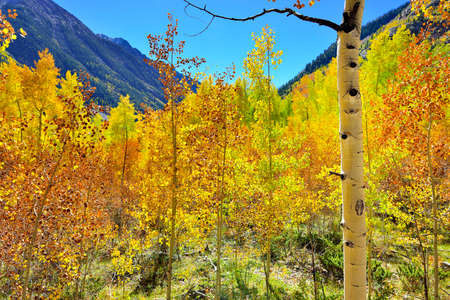 yellow, red and green aspens and colourful mountains of Colorado during foliage season photo
