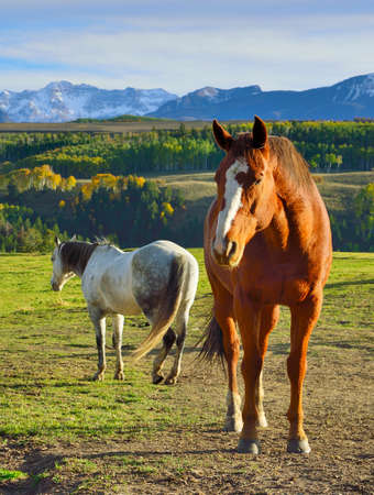 horses in front of the colourful mountains of Colorado during foliage season photo