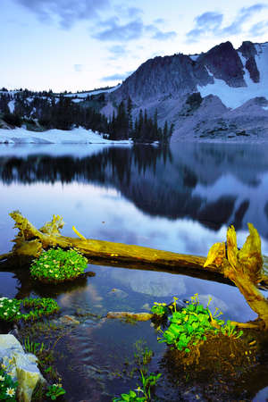 Wild Flowers and lake in Snowy Range Mountains of Medicine Bow, Wyoming during sunset in summer