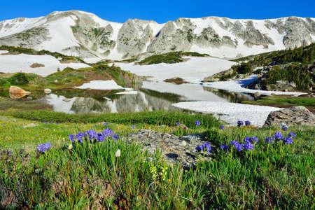 Alpine meadow with wild flowers and lake with reflection in Snowy Range Mountains, Wyoming Stock Photo
