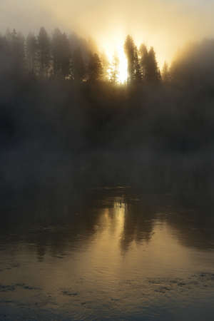 hayden: sun shining through the fog over the river and trees in Hayden Valley of Yellowstone National Park in summer