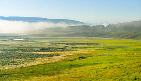hayden: fog over the meadow in Hayden Valley of Yellowstone National Park in summer