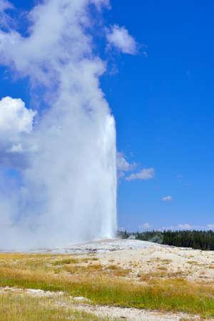 erupting Old Faithful Geyser in Upper Geyser basin of Yellowstone National Park, Wyoming