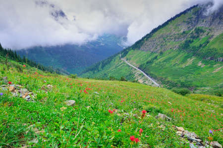 alpine tundra: high alpine tundra flowers and a road in heavy fog in glacier national park Stock Photo