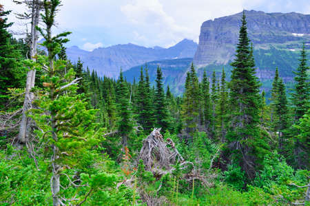 mountains and high alpine conifer forest in glacier national park in summer Stock Photo