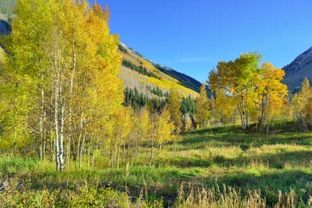 mountains with colorful aspen during foliage season in Colorado