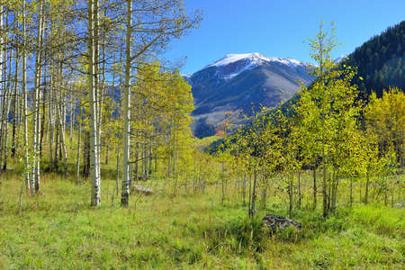 snow covered mountains: snow covered mountains with colorful aspen during foliage season in Colorado