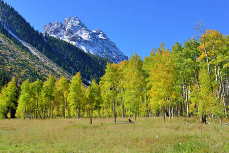 snow covered mountains: landscape view of the snow covered mountains and colorful yellow aspen during foliage season in Colorado Stock Photo