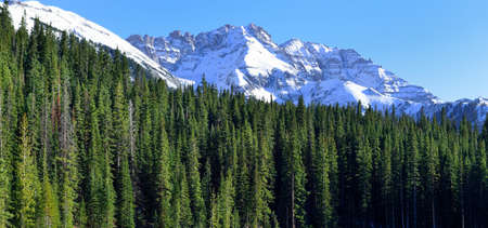 snow covered mountains: view of the snow covered mountains in the back of green conifer forest Stock Photo