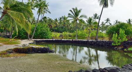 Coconut palm trees growing on mixed sand and lava beach, Puuhonua O Honaunau Place of Refuge National Park, Hawaii