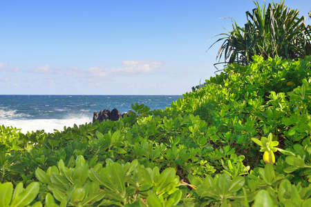 pacific ocean and lava rocks in Laupahoehoe beach park in the Big Island of Hawaii Stock Photo