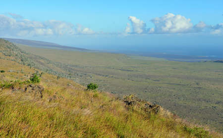 green vegetation on an old lava flow field by the ocean in Volcanoes National Park, Big Island of Hawaii, USA