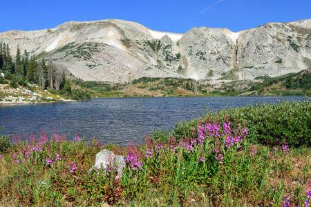 Des fleurs alpines devant le Medicine Bow Mountains of Wyoming pendant l'été Banque d'images - 75951025