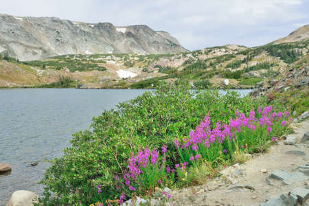 Des fleurs alpines devant le Medicine Bow Mountains of Wyoming pendant l'été Banque d'images - 75989102