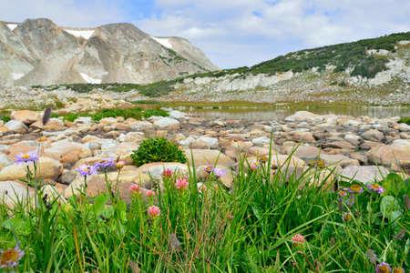 Des fleurs alpines devant le Medicine Bow Mountains of Wyoming pendant l'été Banque d'images - 75989104
