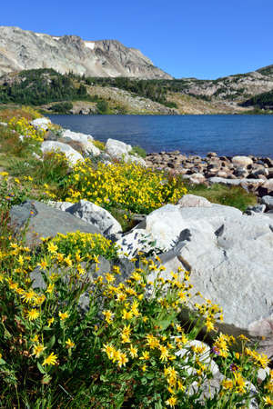 Alpine flowers in front of the Medicine Bow Mountains of Wyoming during summer