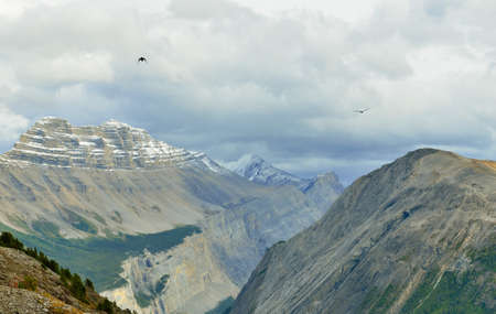 Birds flying over the peaks of the mountains during cloudy day in Canadian Rockies along the Icefields Parkway