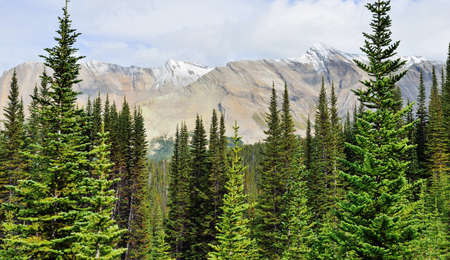 High mountains and alpine forest of the Canadian Rockies along the Icefields Parkway between Banff and Jasper Stock Photo