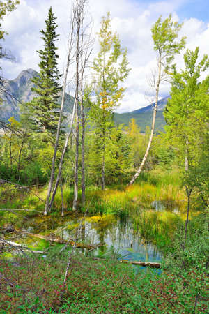 Beautiful alpine forest reflecting in an alpine lake along the Icefields Parkway between Banff and Jasper during foliage season with changing yellow, green and red leaves