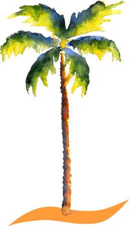 Beautyful watercolor Palm tree picture, aquarell scetch, vector illustration