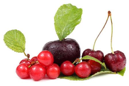 far eastern: Plum, cherries and Far Eastern