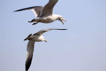 Sea gulls Imagens