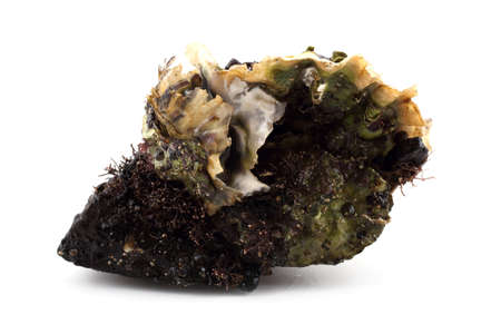 Oysters on stone
