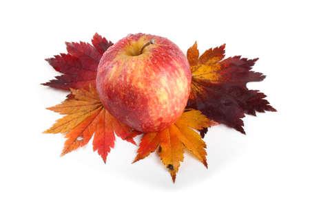 Gala apple on autumn maple leaves Stock Photo
