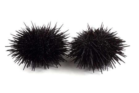 Black sea urchins Imagens