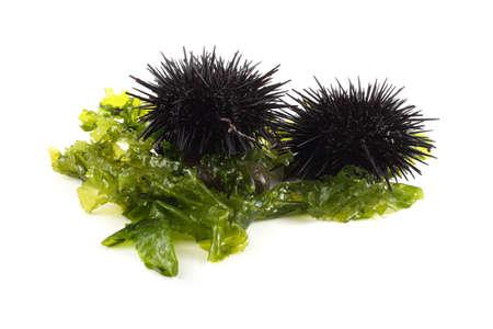 Black sea urchin and alga