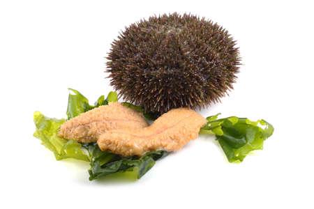 Gray sea urchin and caviar Imagens