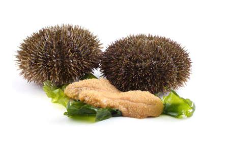 Gray sea urchin and caviar Imagens - 121781759